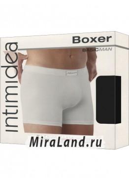 Intimidea boxer man