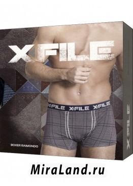 X file raimondo boxer
